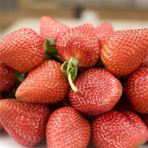 sunnyridge_strawberryfarm